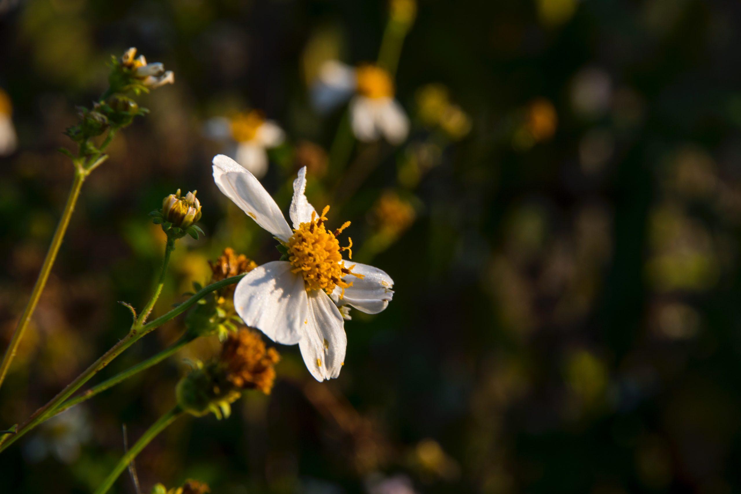 Blume mit Blütenstaub