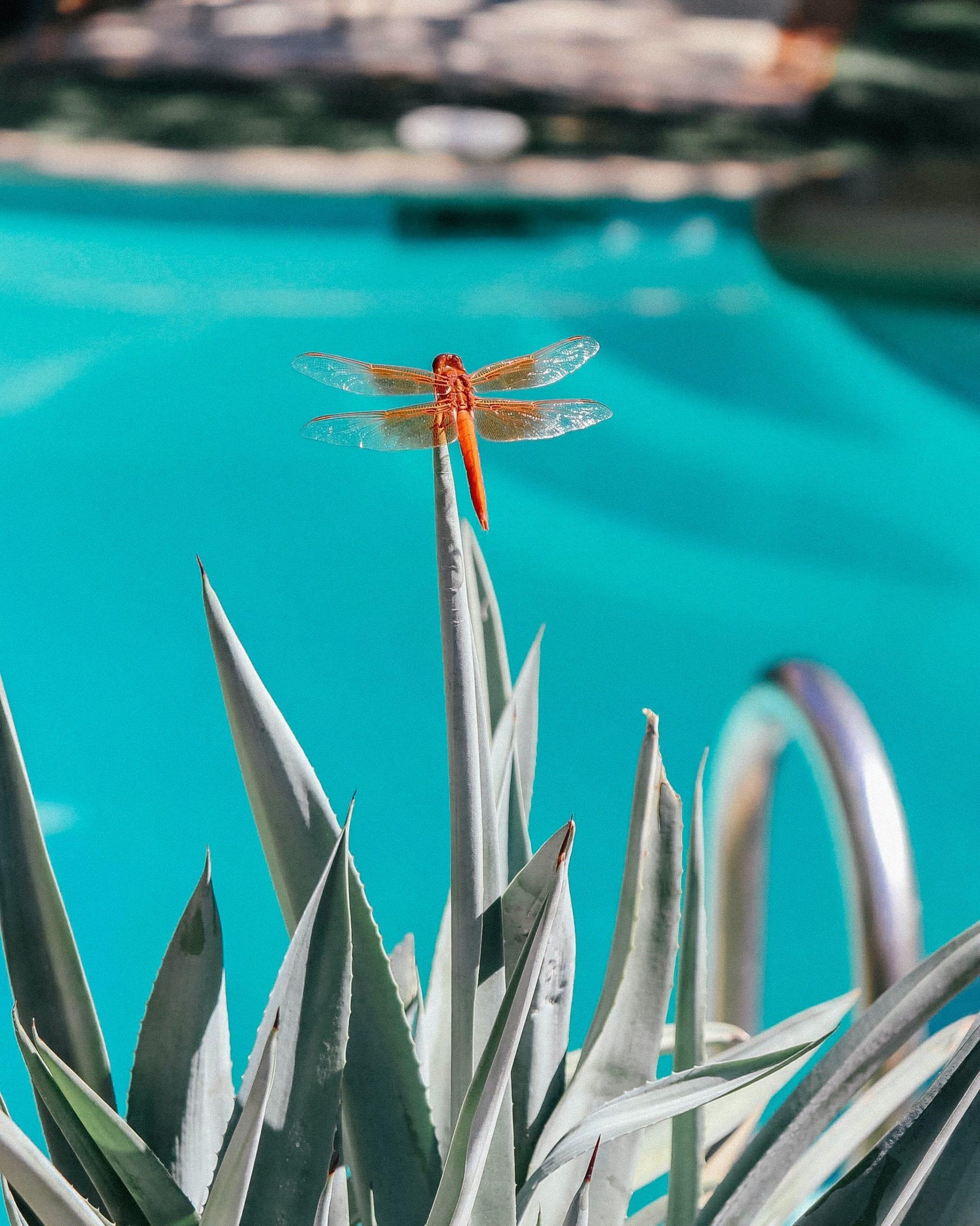 Pflanzen am Pool sind dekorativ und belebend.